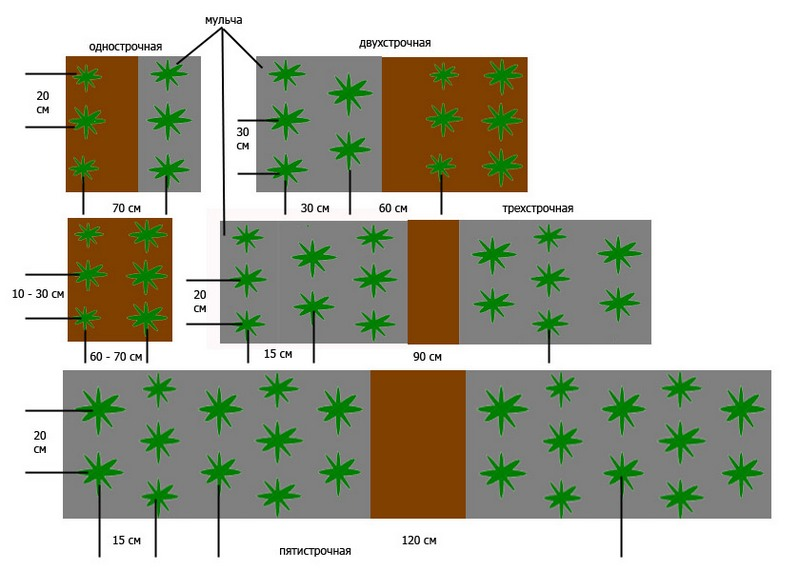 схема посадки клубники.